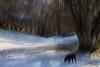 8  Winter Wonderland