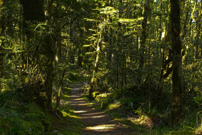 Path of Abundance