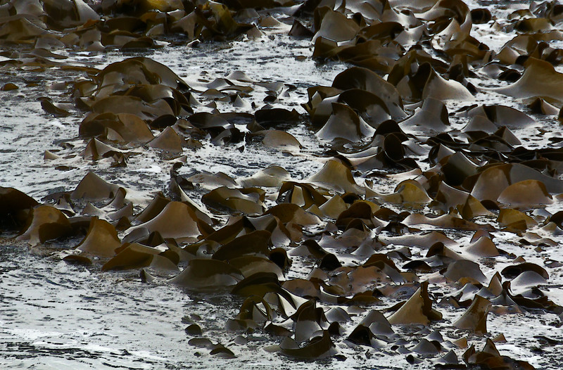 Seaweed raft