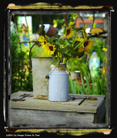 Sunflower Field - Rutledge, GA