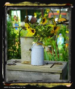 Sunflowers - Rutledge, GA