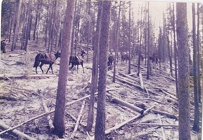 Allen Killmers hunting trip to Idaho, on horseback.  He had a blast, just loves talking about it.