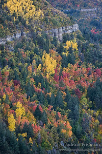 Maples and aspens on the cliffs of New Mexico's Manzano Range, October 2010.