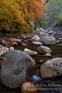 Maples, Stones and Water, Gila Wilderness, New Mexico, October 2008.