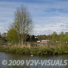 Close Up of an island on Middle Lake, Gold Valley, Aldershot, England. © 2009 Brian Gay