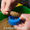 Using a Garbolino speed mould step 5. Withdraw the feeder from the mould and you will see the bait has adhered to the feeder. © 2009 Brian Gay