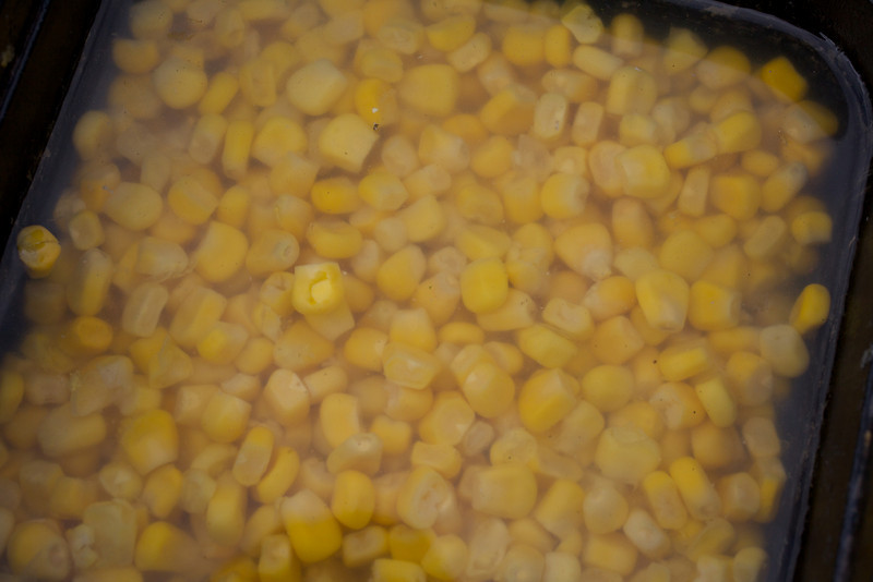 Close-up of yellow sweetcorn in water ina bait box. Will Raison Festival Psyche shoot at Bat Lake, Gold Valley, 220909. © 2009 Brian Gay