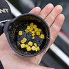 About 25 grains of corn in the bottom of a Drennan Pole Cup attached to a cupping kit resting in the palm of Will Raison's hand . © 2011 Brian Gay