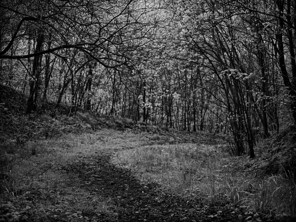 Woodland path, Binn Wood, Glenfarg