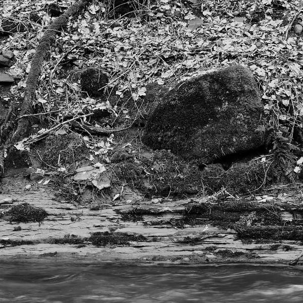Mossy Boulder Texture (B&W)