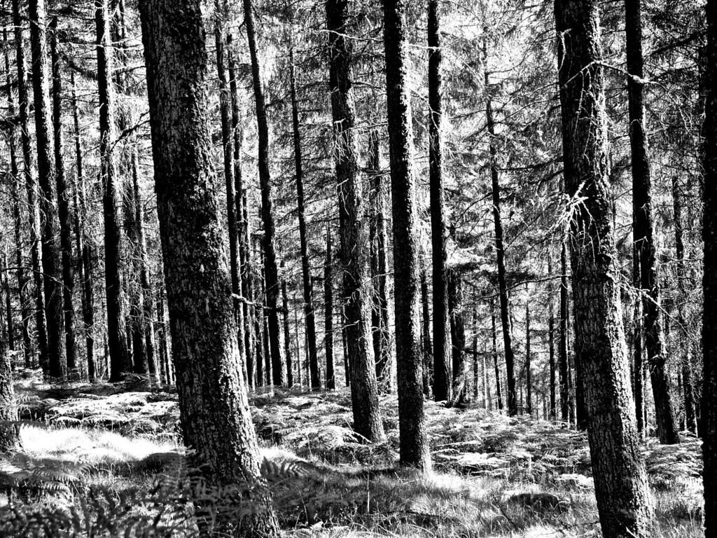 Endless woods (intermediate)