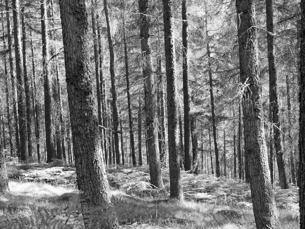 Endless Woods (original)