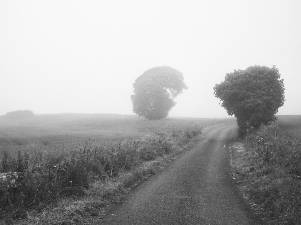 Into the mist 1