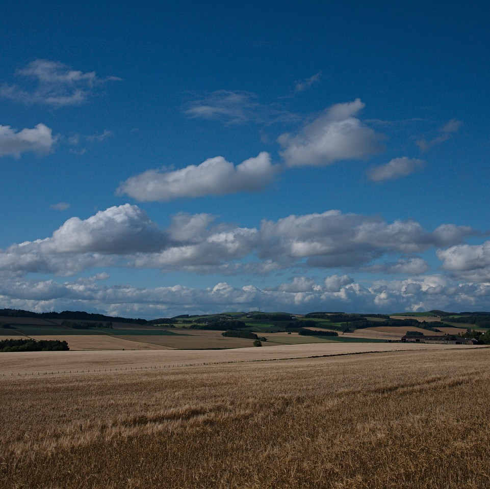 High Summer, North East Fife