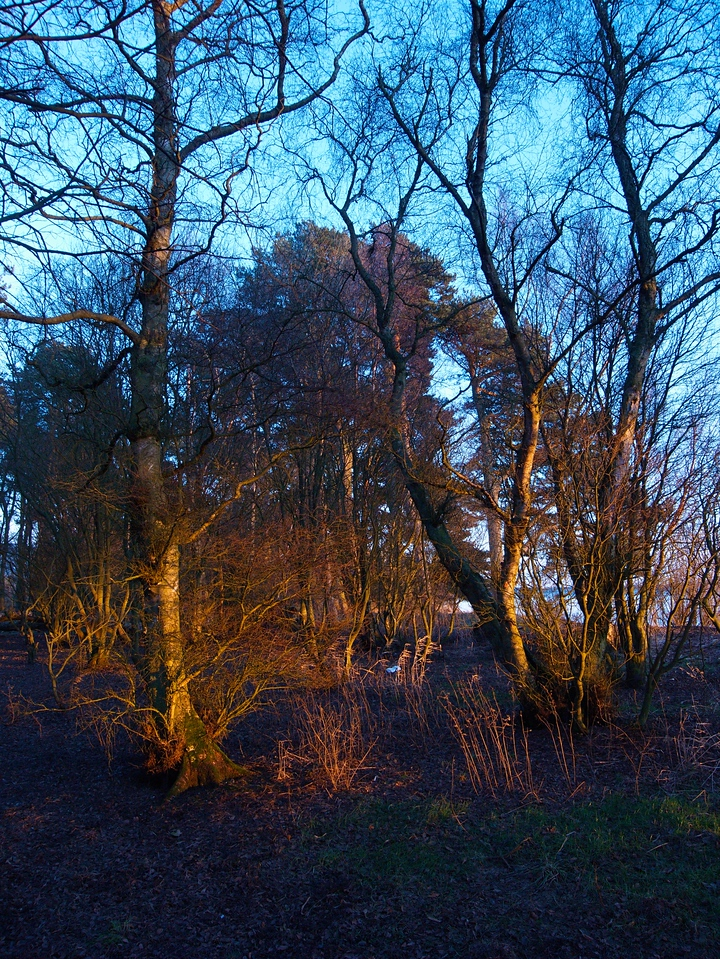 Sun on trees 2 - Loch Leven