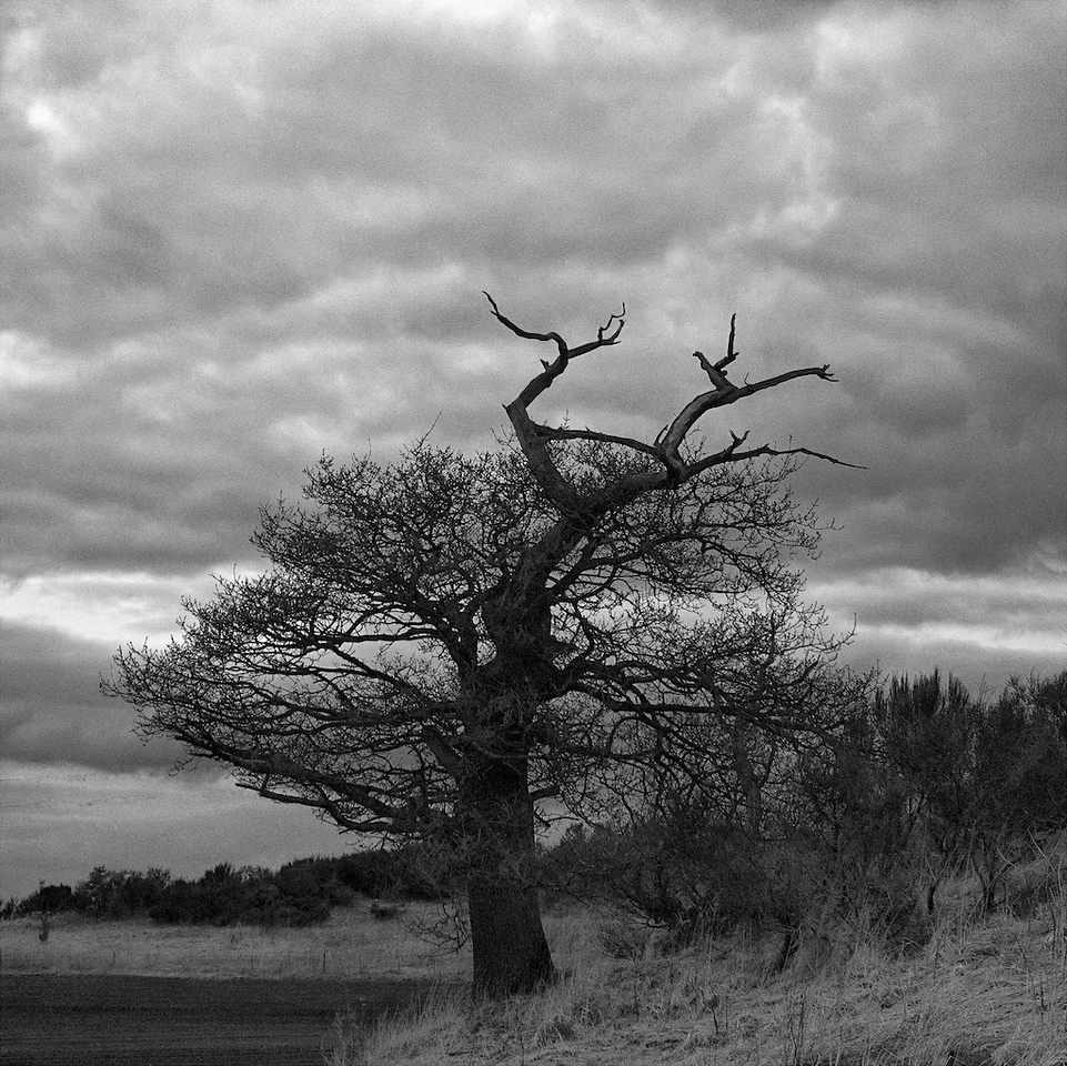 Blasted oak - Balvaird Castle