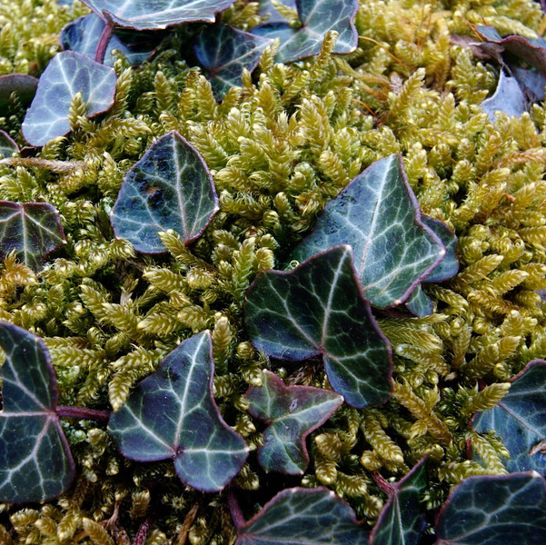 Ivy and Moss