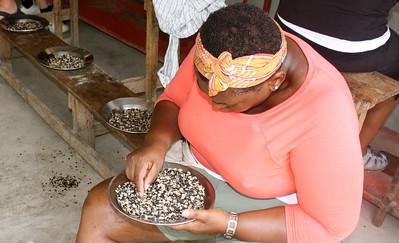 Team member Donna Fitzgerald sorts beans.