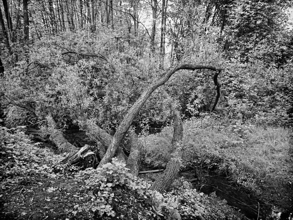 Fallen tree, Paderborn