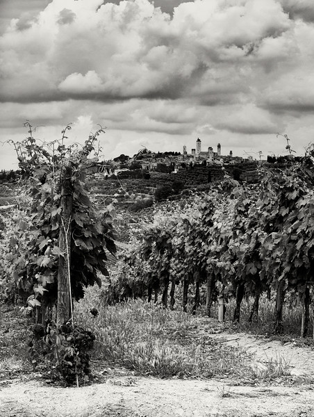 Vineyards of San Gimignano