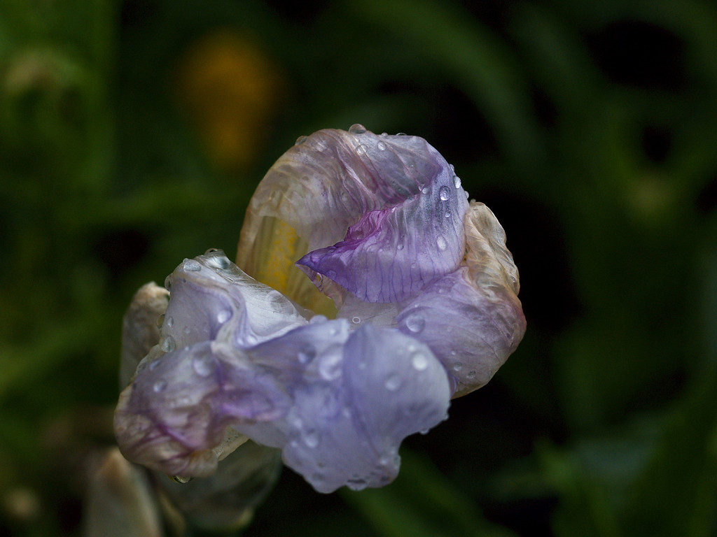 Battered by rain 3