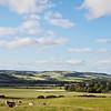Edenshead - summer landscape