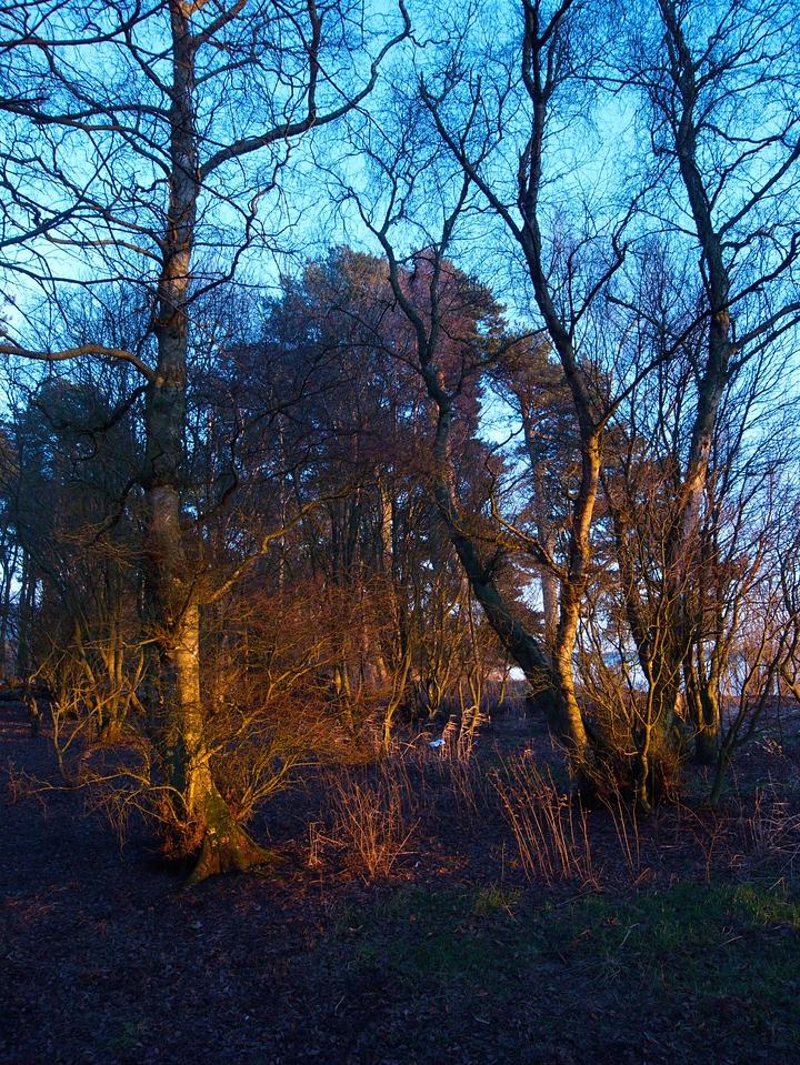 Sun on trees 2 - Loch Leven