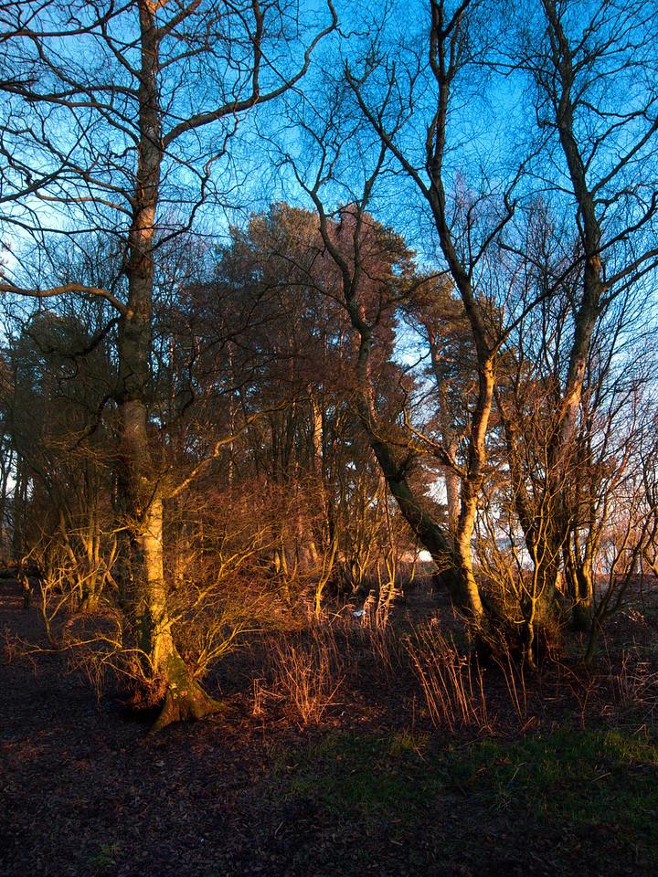 Sun on trees, Loch Leven