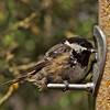 Birds at the feeder