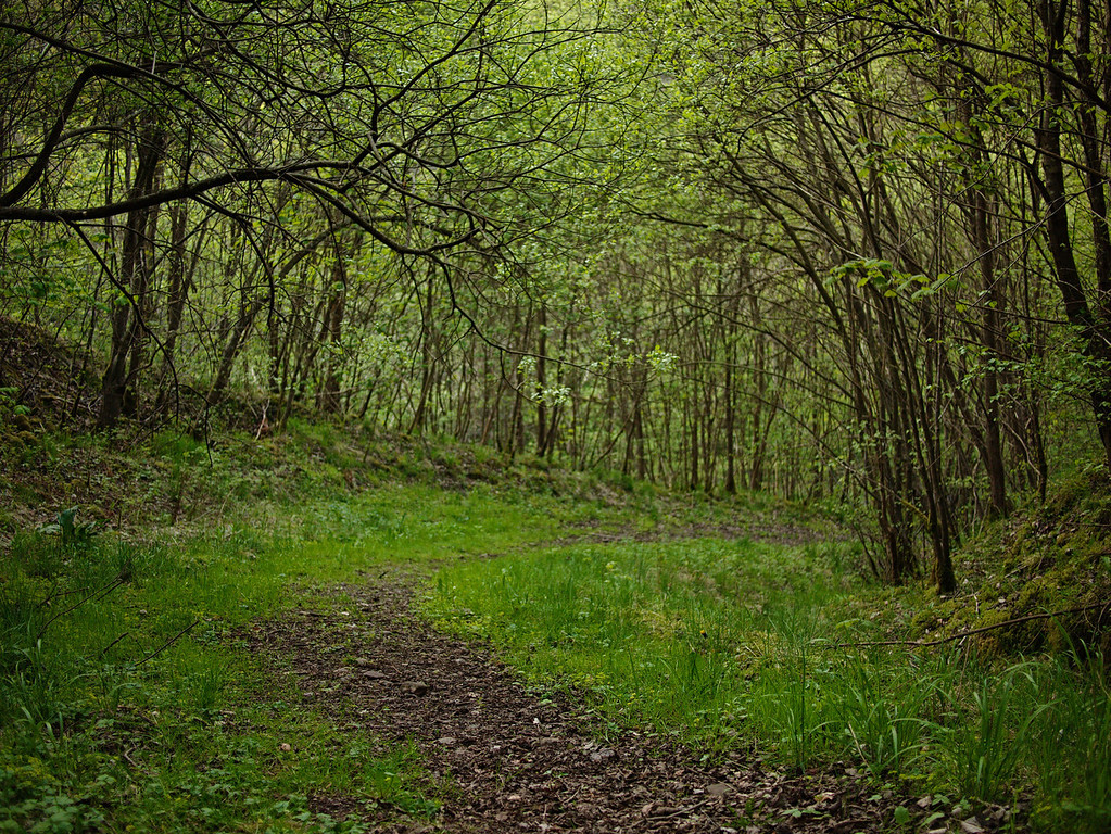 Woodland Path, Binn Wood, Glenfarg