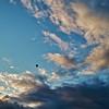 Evening Balloon