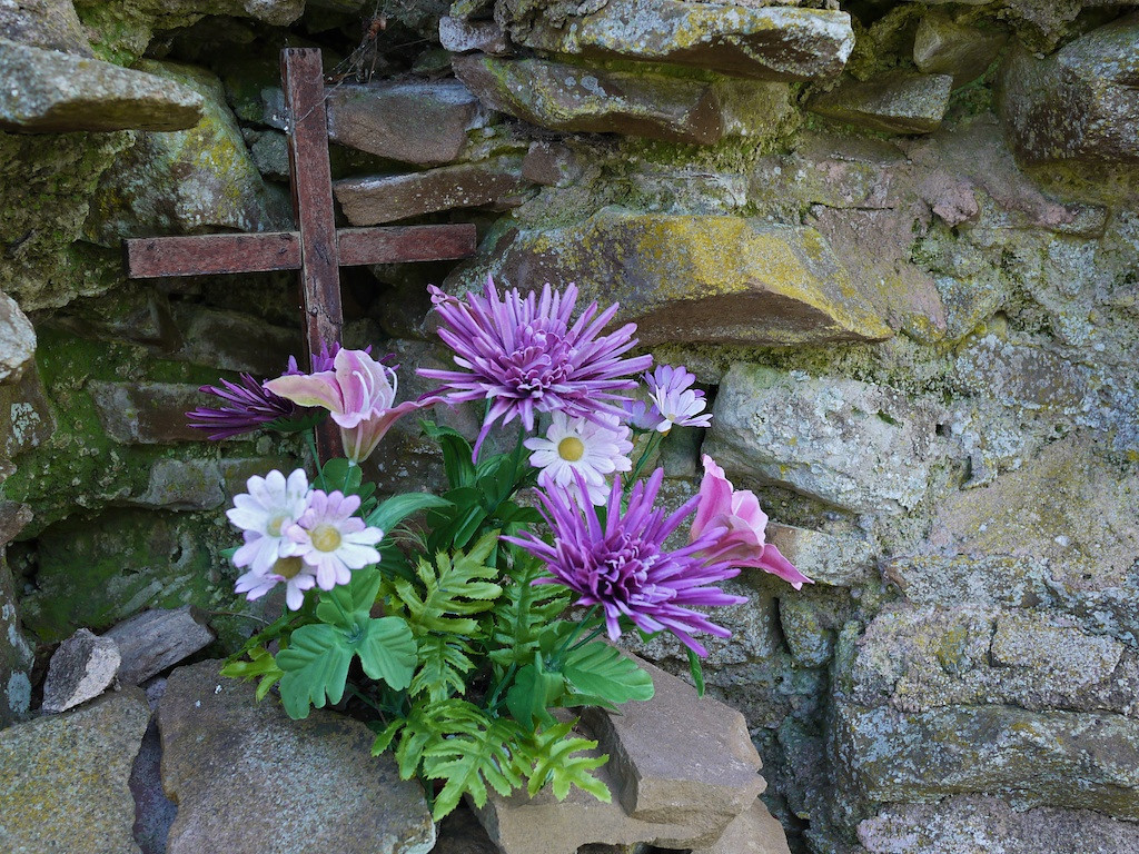 Flowers - Balmerino Abbey