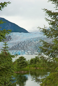 Artsy glacier shot through pines in portrait mode