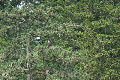 Find Waldo. No, find the eagle.