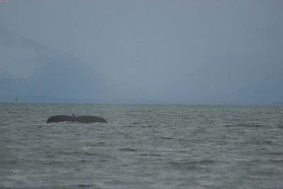 Yep, three hours out on the water, and this is as close as we came to a whale.
