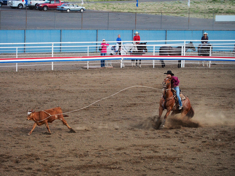 Hooked,  Cody Nite Rodeo, Cody WY