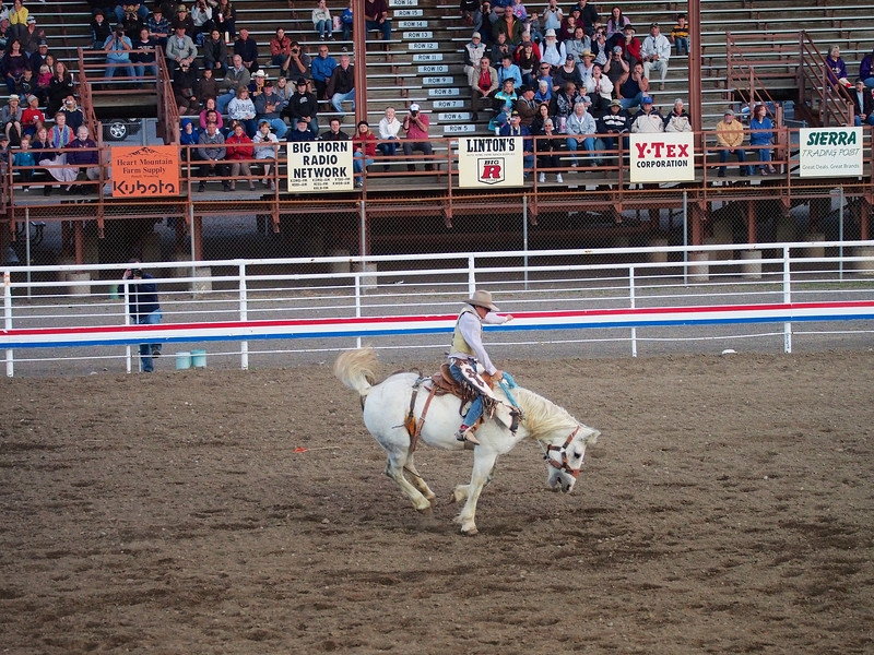 Bucking bronco,  Cody Nite Rodeo, Cody WY