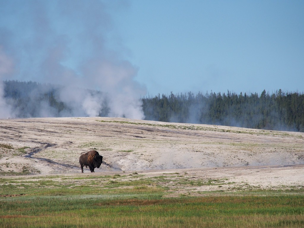 Yellowstone personified, Lower Geyser Basin, Yellowstone NP