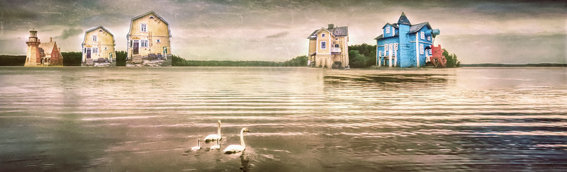 Swans at Pispala