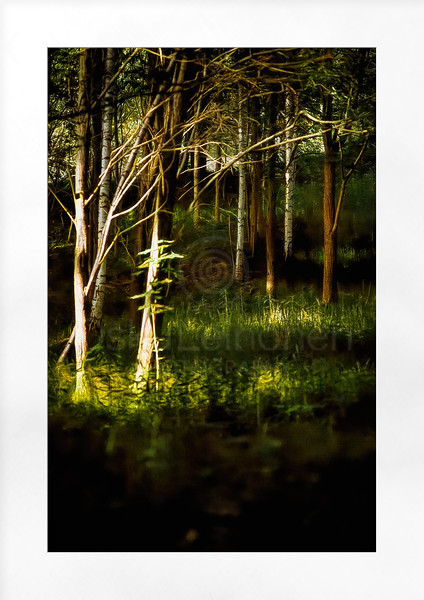 Light on the Forest