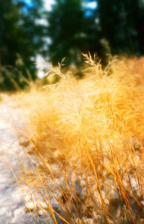 Parting tall Grass