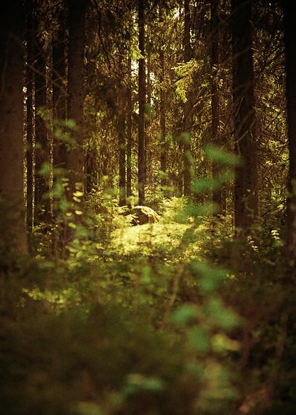 Through Deep Forest (Sanctuary)