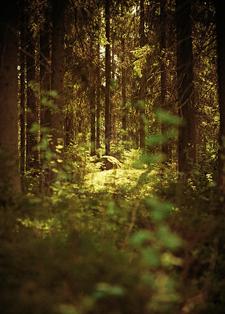 Through Deep Forest (Sanctuary)