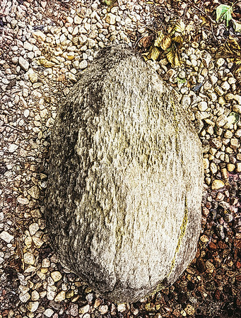 Hedgehog Stone (Pebbles)