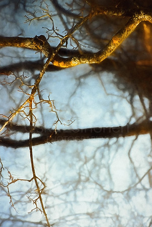 Warm Bark (Your Spine as Branch)