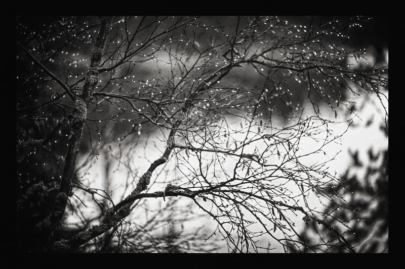 After Rain (Water Drops) BW