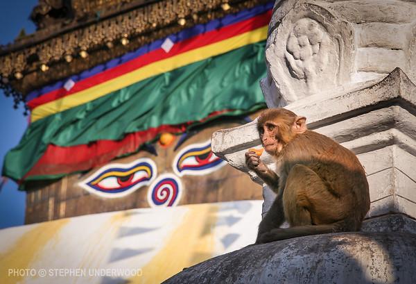 Buddha's eyes appear to watch a monkey at Swayambhunath Stupa in the Kathmandu Valley