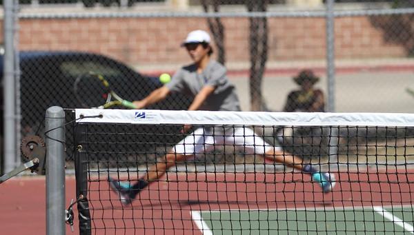 Lobo tennis