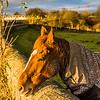 Alec's horse