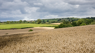 Leicestershire fields